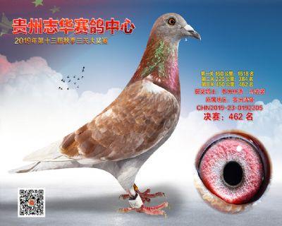 贵州志华决赛462名
