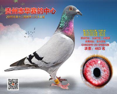 贵州志华决赛463名