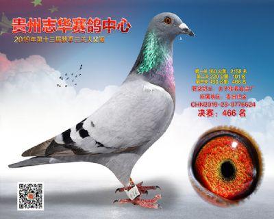 贵州志华决赛466名