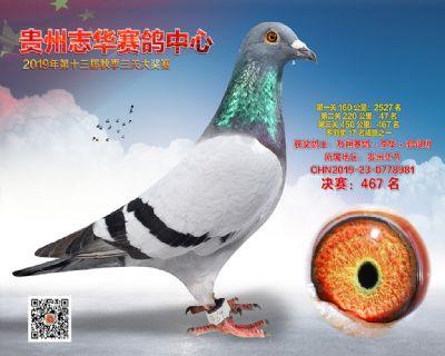 贵州志华决赛467名