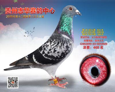 贵州志华决赛468名