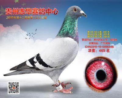 贵州志华决赛469名