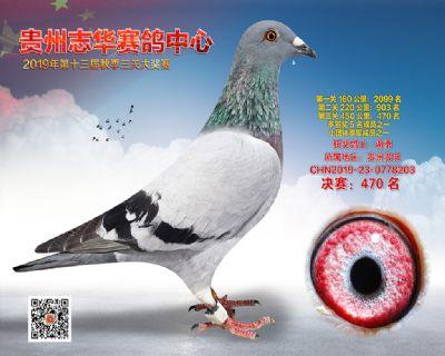 贵州志华决赛470名