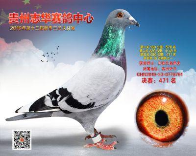 贵州志华决赛471名