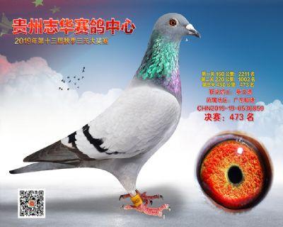 贵州志华决赛473名
