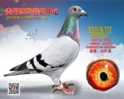 贵州志华决赛475名