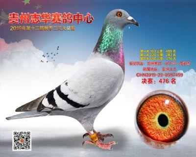 贵州志华决赛476名
