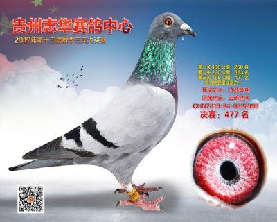 贵州志华决赛477名
