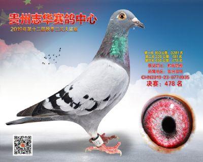 贵州志华决赛478名