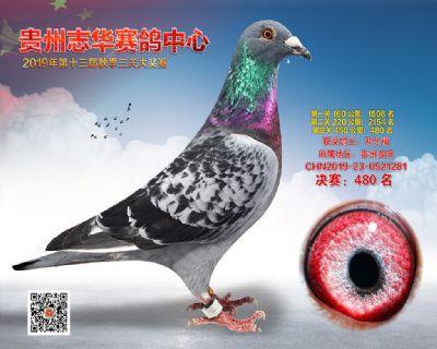 贵州志华决赛480名