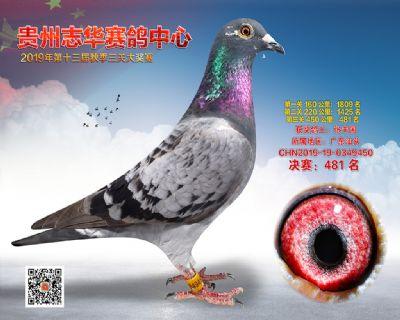 贵州志华决赛481名