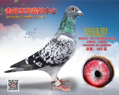 贵州志华决赛483名