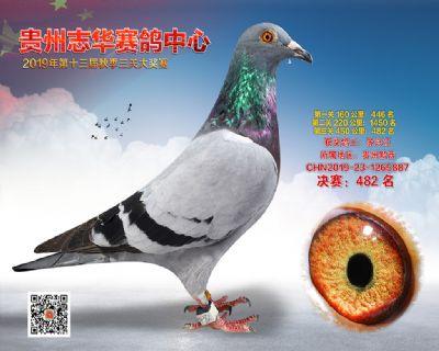 贵州志华决赛482名