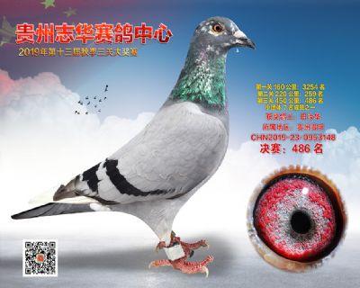 贵州志华决赛486名