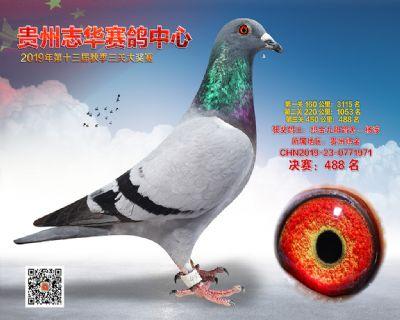 贵州志华决赛488名