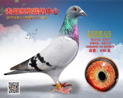 贵州志华决赛490名
