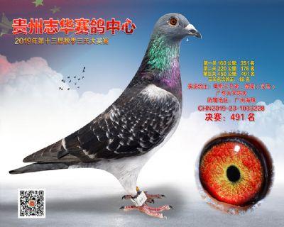 贵州志华决赛491名