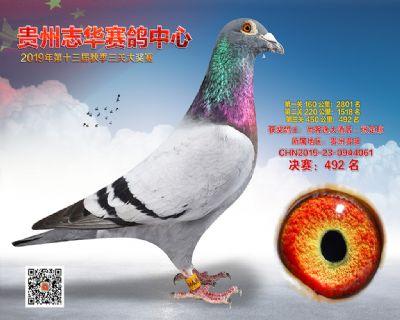 贵州志华决赛492名
