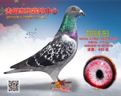 贵州志华决赛493名