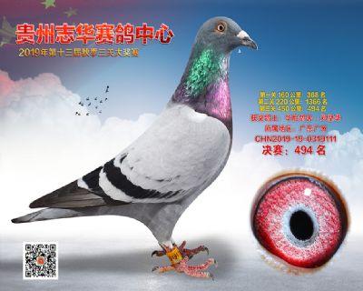 贵州志华决赛494名