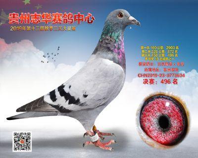 贵州志华决赛496名