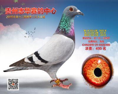 贵州志华决赛499名