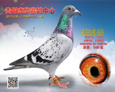 贵州志华决赛500名