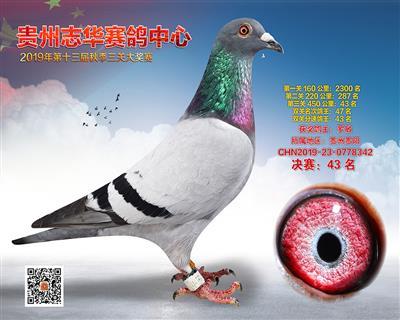 贵州志华决赛43名