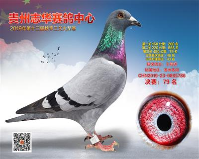 贵州志华决赛79名