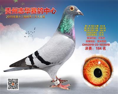 贵州志华决赛184名