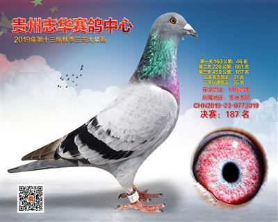 贵州志华决赛187名
