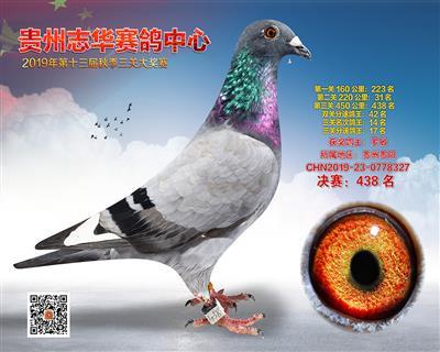 贵州志华决赛438名
