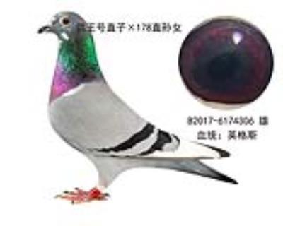 ��王�×178直�O女