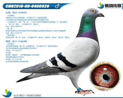 �R伯特-大�雀呤�926