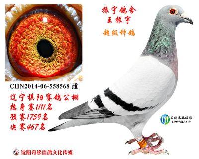 祺阳公棚决赛467名(振宇鸽舍+王秋实)