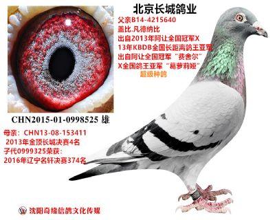 北京长城鸽业