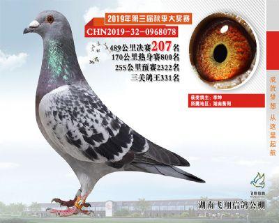 湖南飞翔决赛207名