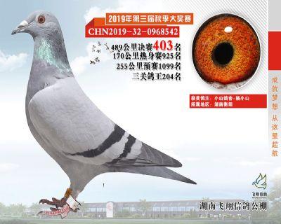 湖南飞翔决赛403名