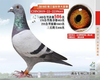 湖南飞翔决赛506名