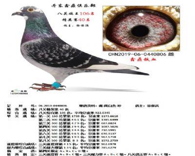 丹东鑫鼎八关鸽王106名