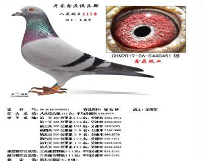 丹东鑫鼎八关鸽王113名