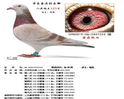 丹东鑫鼎八关鸽王123名