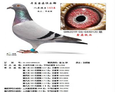 丹东鑫鼎八关鸽王143名