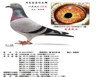 丹东鑫鼎八关鸽王144名