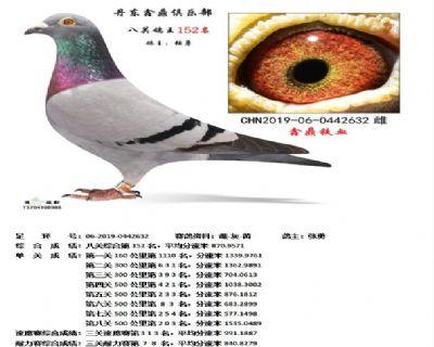 丹东鑫鼎八关鸽王152名