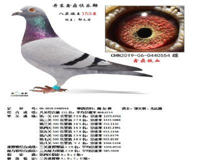 丹东鑫鼎八关鸽王153名