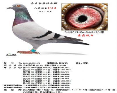 丹东鑫鼎八关鸽王161名