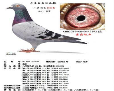 丹东鑫鼎八关鸽王162名