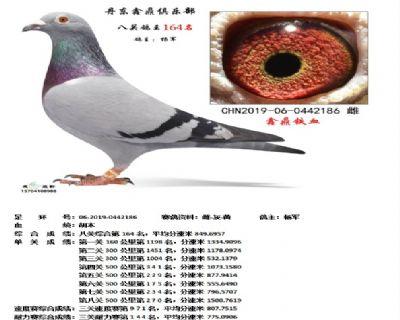 丹东鑫鼎八关鸽王164名