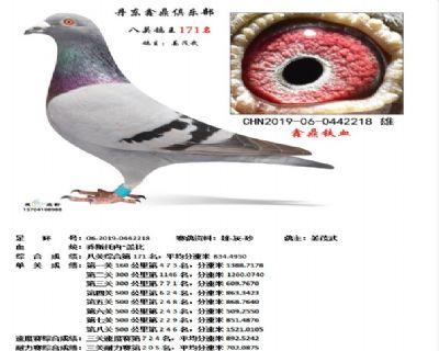丹东鑫鼎八关鸽王171名
